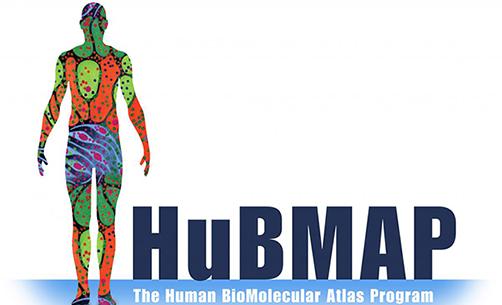 HuBMAP image